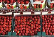 スタバとゴディバでストロベリーフローズンドリンクを飲み比べてみた  〜期間限定メニューのイチゴ感比較レビュー